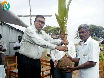 Trinco Coconut seedling distribution