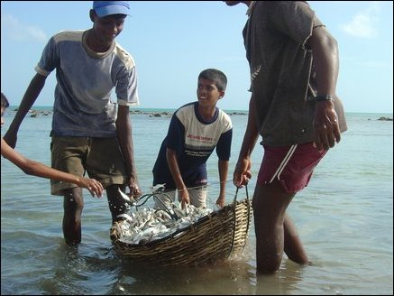 Children assist adults in sorting the fish in baskets. They then dip the basket and wash the fish in the sea.