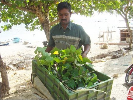 Mr. M. Donald, a vendor wrapping fish basket in Poovarasam leaves (a tree common in Jaffna Peninsula) for the motorcycle ride to Jaffna town. He purchases about 50kg of fish daily from this area. The Poovarasam leaf when rolled serves as a wind-intrument which the vendors blow to attract buyers.