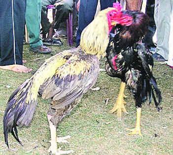 tamilnet
