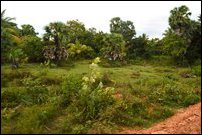 Lands within SL military zone in Keappaa-pulavu